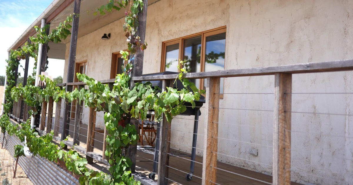 Gorgeous vine on the verandah of this house. It's going to look spectacular when final coat is done!